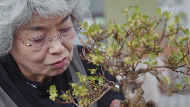 Nghe nhan Nhat ly giai tai sao cay bonsai co gia tren 1 trieu USD